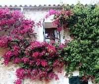 Hotel Rural SOlivaret