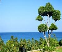 Bodos Bamboo Bar Resort