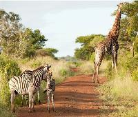 Ubizane Wildlife Reserve
