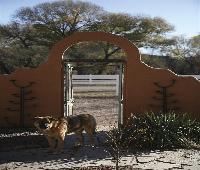 Lazy Dog Ranch
