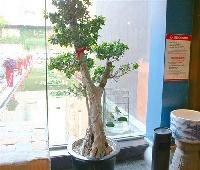 Laozhuancun China Community Art and Culture Hotel
